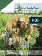 Sri Method Paddy Cultivation