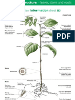 b3plant