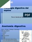 Fisiología digestiva del equino