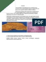 Vesicula e Pancreas