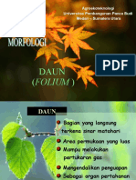Botani - Morfologi Daun