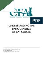 understanding-cat-colors