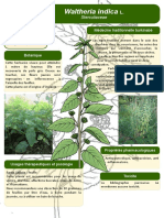 38-Poster-formation-Burkina-Faso-Waltheria-indica-L-JdM