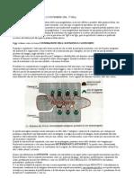 Lezione 03 (22-11-06) Immunologia