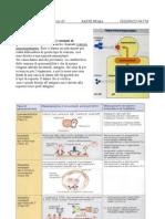 Lezione 11 (10-01-07) 1° parte- Immnunologia
