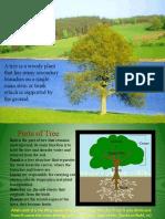 Presentation.Tree