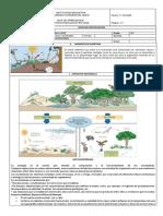 Componentes y Relaciones en Un Ecosistema