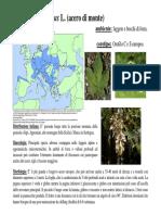 07a Lezione 2009-2010 Aceri Tigli Frassini Carpini Ridotta PDF