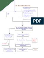 pathophysiology of nephrolithiasis, struvites stone (staghorn calculi)