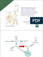 Tema 14. Oxidación de ácidos grasos
