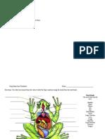 Frog Dissection Worksheet