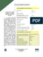 Cultivar Feijão Saracura Carioca