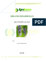 cultivo_de_la_uva