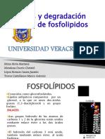 Sntesis y degradacin DE FOSFOLIPIDOS