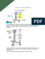 Resumo de reforço morfo e pi sistema respiratório