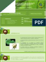 Exposicion-Fotosintesis
