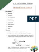 Obsevacion de Las Celulas Sanguine As