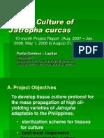 Tissue culture of Jatropha curcas