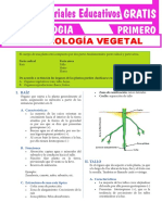 Organología Vegetal