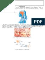 3. Sistem Nervoso 4. Exercícios (2)