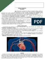 7. Sistema Circulatorio   8. Exercícios