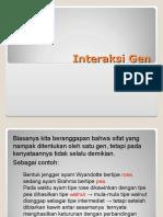 Interaksi Gen