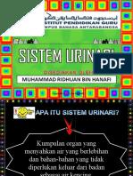 SISTEM URINARI MANUSIA