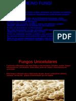 (BIO) Reino Fungi