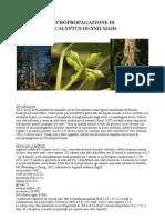 Micropropagazione Di Eucalyptus Dunnii Maid