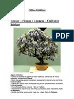 Bonsai – Pragas e doenças (Cuidados básicos)