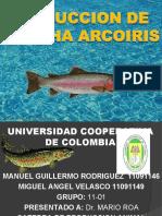 Produccion de Trucha Arcoiris