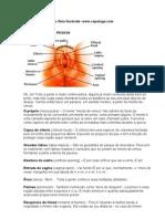 Manual.do.Minete