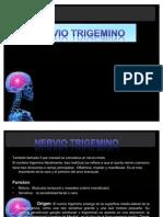 nerviotrigemino