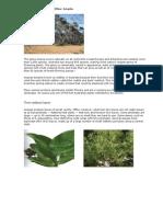 Australian Forest Profiles