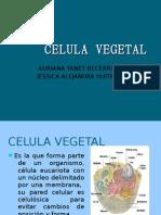 CELULA_VEGETAL