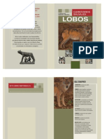 29-Texto Informativo Lobos carnívoros salvajes