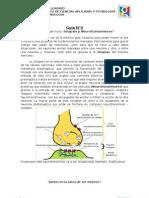 Guia 3. Sinapsis y Neurotransmisores