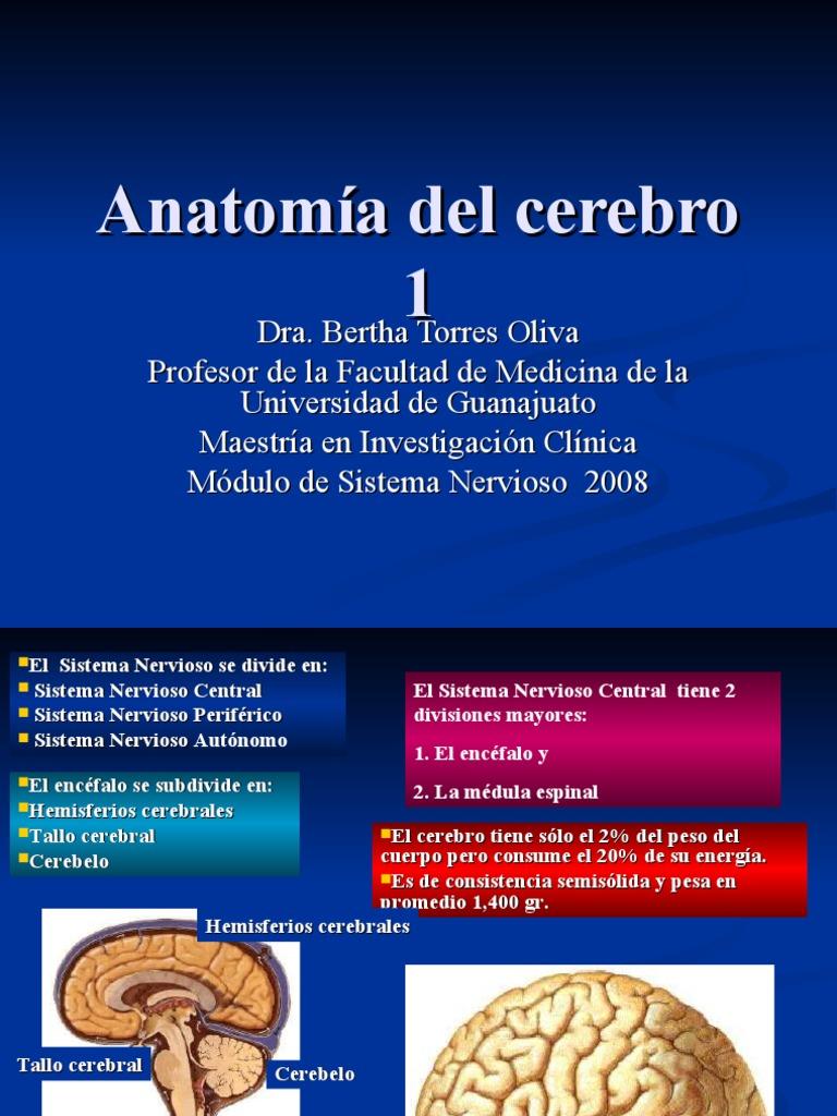 Encantador Maestría En Anatomía Cresta - Imágenes de Anatomía Humana ...