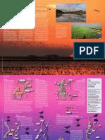 Ruta observación de aves Aljarafe-Doñana