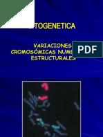CLASE_7_Citogenetica