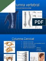 La Columna Vertebral posiciones radiologicas y anatomia