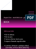 Aspectos anatómicos generales