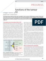 Cytoplasmic Functions of the Tumour Suppressor p53