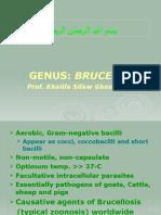 Lecture 25 Brucella