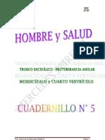 Hombre y salud Nº 5 Tronco encefalico, protuberanci, IV ventriculo y Mesencefalo