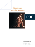 Bipedismo e Postura Erecta
