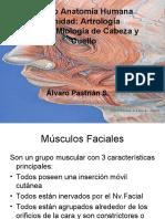 Clase Miologia Facial