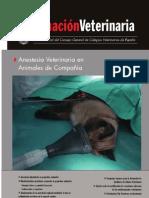anestesia veterinaria en animales de compañia