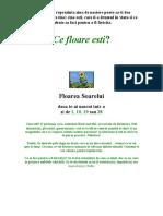 Cifra_de_nastere_care_corespunde_unei_flori[1]