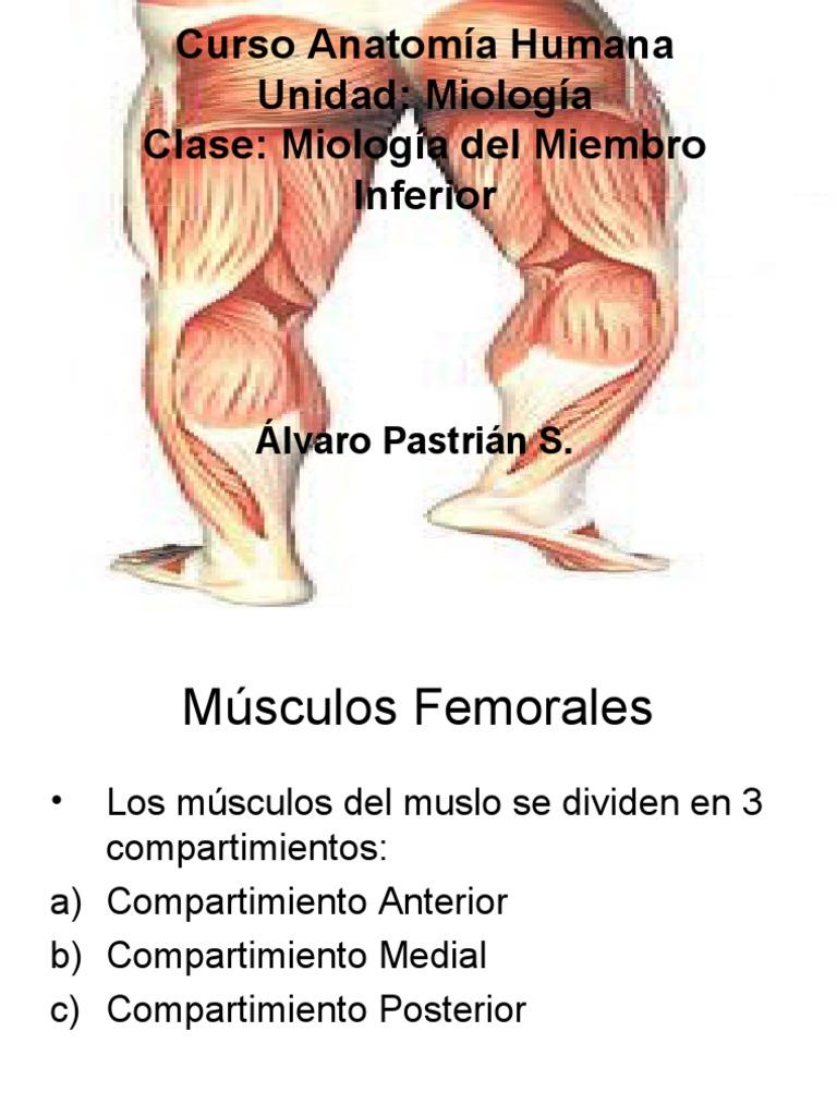 Miología M Inferior